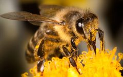 Rise of the Planet of the…Bees?