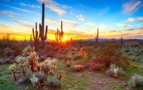 Fun Summer Ideas For Escaping the Arizona Heat!